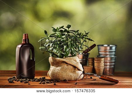 Summer work in the garden. Transplanting or bursting a beautiful pot flower at home. Concept photograph for background or advertising.