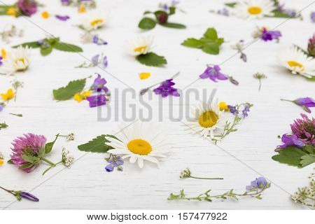 Side view on beautiful wild flowers on the white wooden background. Daisy bellflowers clover forget me not flowers. Closeup of floral pattern. Background