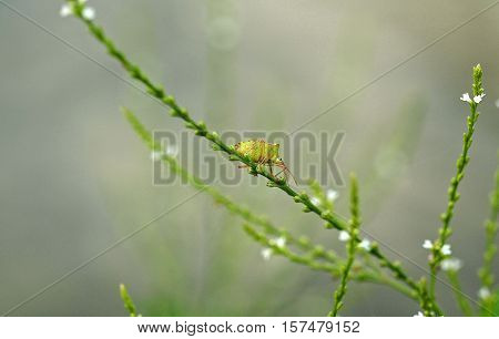 A bug just hanging out on a piece of a flower stem.