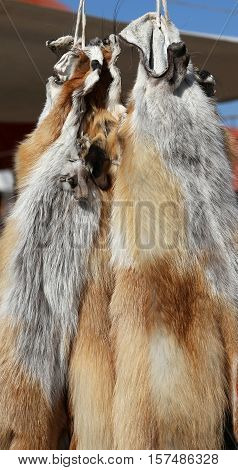 Wild animal tanned furs and skins hanging