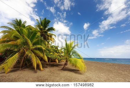 Le Coin Beach Le Carbet Martinique Caribbean