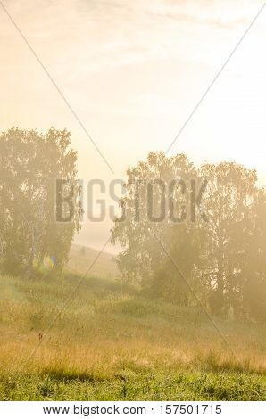 on a green lawn in the early foggy morning . dew on the lush green grass a summer misty morning.  Morning landscape in summer thick fog. dense fog in the morning.  early morning. forest hiding in the fog.
