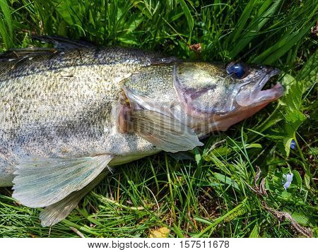 Good catch fisherman, fish on a hook. Active lifestyle.