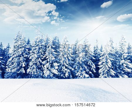 Snow Covered Trees In The Mountains. Beautiful Winter Landscape. Winter Forest. Creative Toning Effe