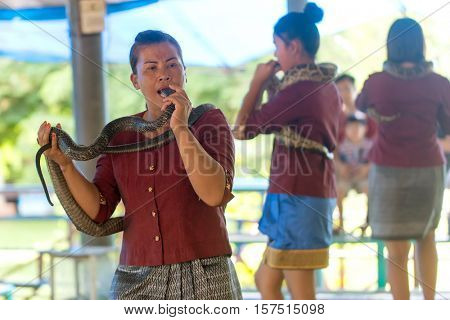 KING COBRA VILLAGE, THAILAND, SEPTEMBER 25, 2016 : A woman is inserting the head of a snake in her mouth during a public show in the King Cobra Village, Thailand
