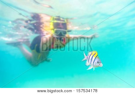 selective focus to the fish : Skin diving or snokerling at shallow of beach distrub the sea life