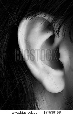Male ear close up black-white body part photo.