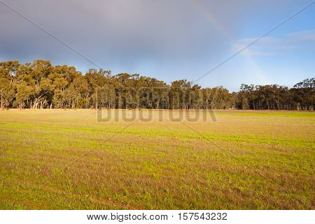 Dramatic evening light with storm clouds and rainbow over green fields backed by eucalypt trees in rural Victoria, Australia