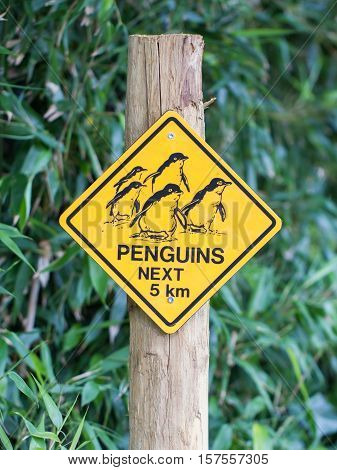 Road sign caution for birds pinguins yellow sign