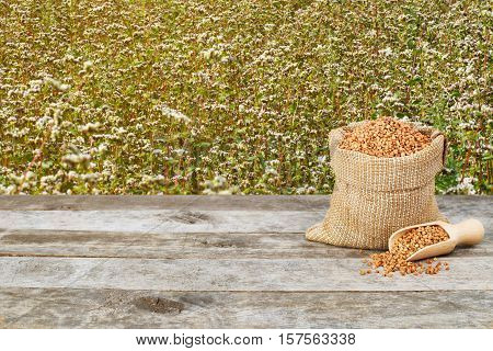 Buckwheat in burlap bag on wooden table with flowering buckwheat field background. Buckwheat. Agriculture and harvest concept. Uncooked buckwheat groats on nature background. Buckwheat with buckwheat field background