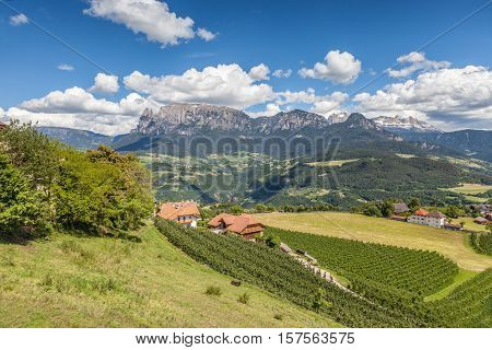 Vineyards At The Ritten