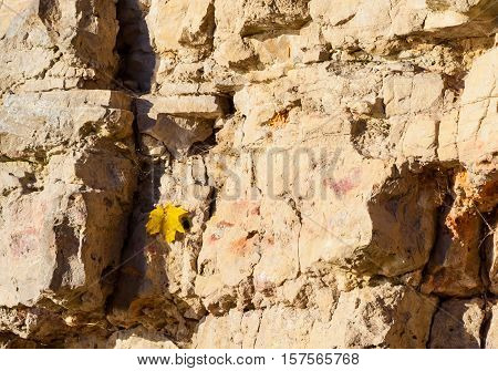 ruined stone wall collapses in parts, autumn yellow maple leaf hangs on the rocks caught on the web, sunny evening, the yellow wall of natural material, appearance and autumn background,