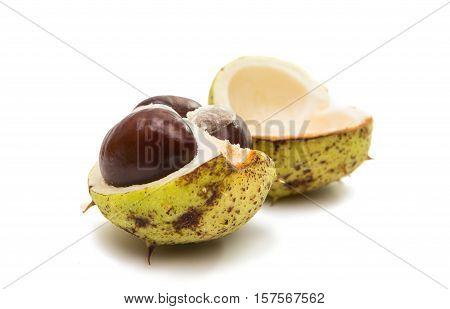 fruit chestnut nut on a white background