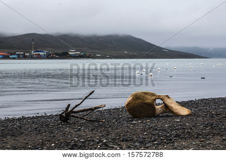 vertebra of the spine is a whale on the beach in Chukotka, Russia