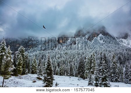 The concept of eco-tourism. Evergreen forests in the valley covered with the first snow. The landscape of the Dolomites in the snow. Heavy rain clouds flying over mountains