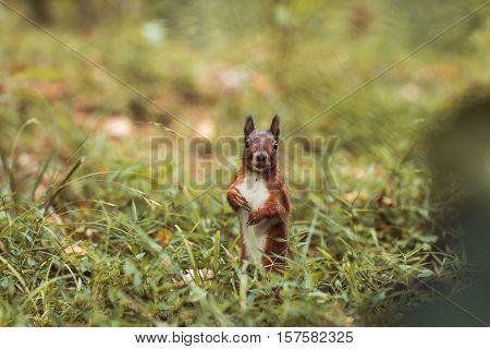 squirrel in grass in park in autumn