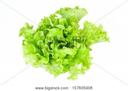 Fresh green lettuce solated on white background