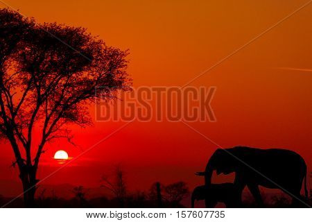 Sunset in Kruger National Park, south Africa. Elephants in silhouette