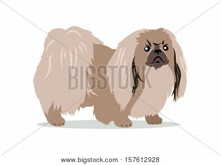 Pekingese isolated on white background. Lion Dog, Peking Lion, Pelchie Dog or Peke. Ancient breed of toy dog, originating in China. Hand drawn home pet. Popular small breed. Series of puppies. Vector