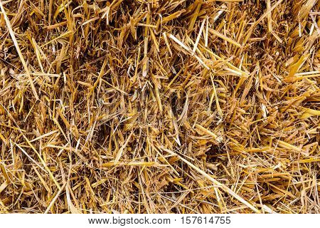 Cattle Fodder At A Ranch Or A Farm.