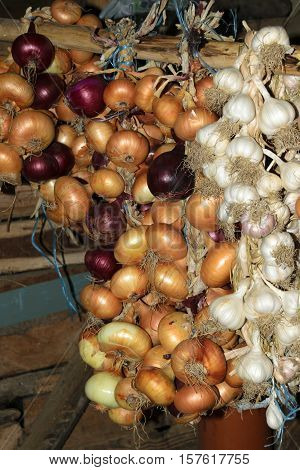 Hanging crop of red and yellow onion and white garlic