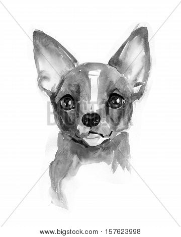 Chihuahua dog, cute face with smile, Chiwawa puppy, watercolor illustration