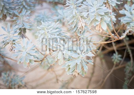 Green nature leaves for rest one's eyes stock photo