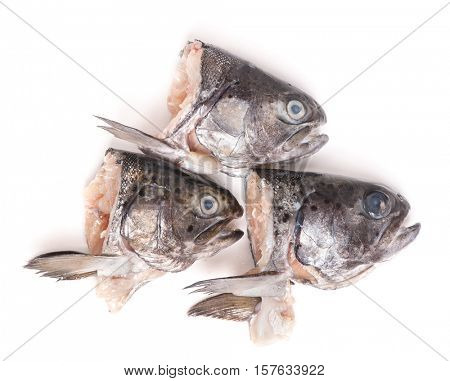 Heads of trout fish isolated on white background