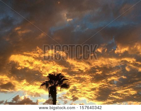 Arizona sky at sunset with the blackened silhouette of a palm tree against a backdrop of orange yellow clouds