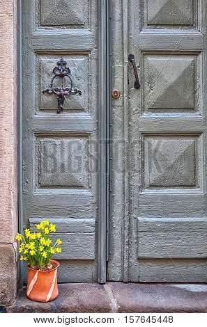 Stockholm. Sweden. Flower pot with yellow narcissus near wooden door in Gamla Stan (Old Town)