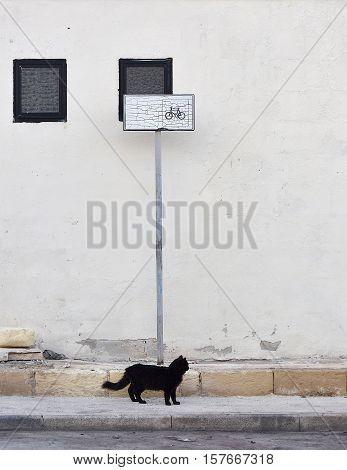 Black cat symbol of bad luck, black cat in the street