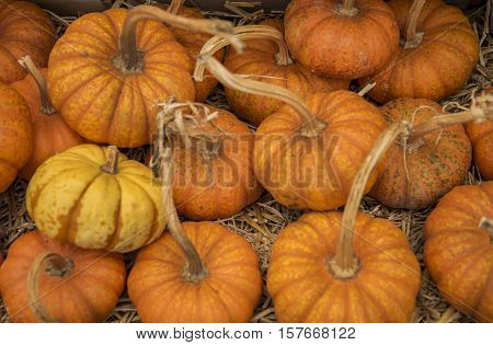 Colorful autumn pumpkins on wooden surface ready to sell