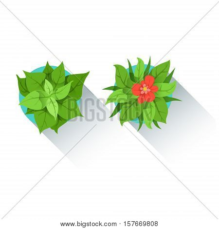 Two Decorative Table Plants Office Worker Desk Element, Part Of Workplace Tools And Stationary Collection Of Objects. Items For Fully Equipped Working Table Vector Illustration With View From Above.