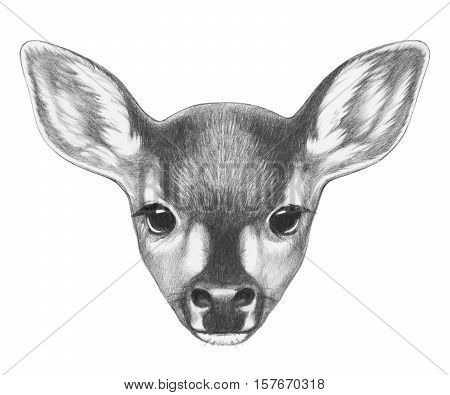 Portrait of Fawn. Hand drawn illustration. Isolated on white background.