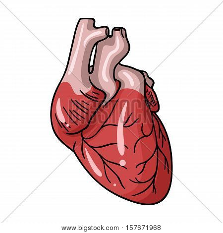 Human heart icon in cartoon style isolated on white background. Human organs symbol vector illustration.