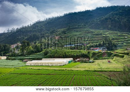 Ooty India - October 25 2013: Vegetable fields and terrace cultivation with glasshouses consisting of frames and white plastic sheets. Forest on hill cloudy sky shaded of green.