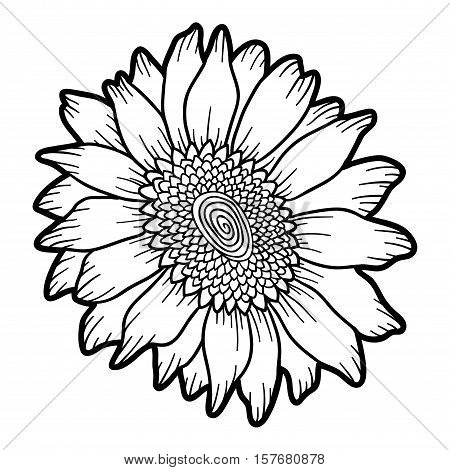 Coloring Book For Children Colorless Flower Sunflower