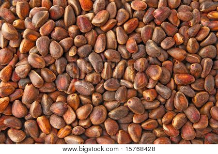 Background From The Nuts Of Siberian Cedar
