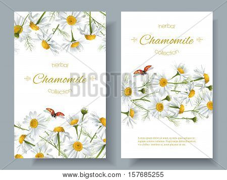 Vector chamomile flower banners with ladybug. Design for herbal tea, natural cosmetics, health care products, aromatherapy, homeopathy. Best for print, wrapping paper