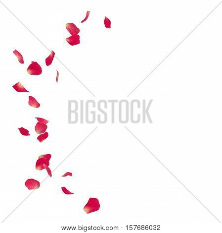 Pink Rose Petals Scattered On The Floor In A Semi-circle. 3D Illustration