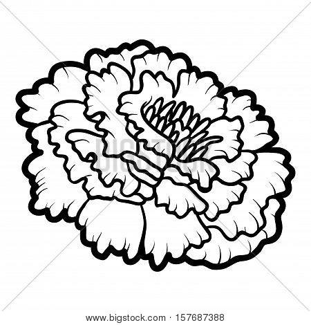 Marigold Images Illustrations Vectors