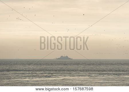 Old ferry on the Wadden Sea surrounded by birds near the island of Terschelling in the Netherlands in the evening sun