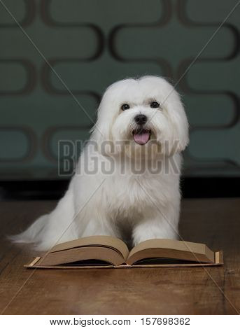 Adorable maltese dog with a sketchbook on a wooden table