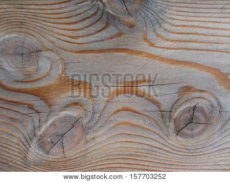 macro photo of a tree structure in grey tones as the source of background in design and photo shop