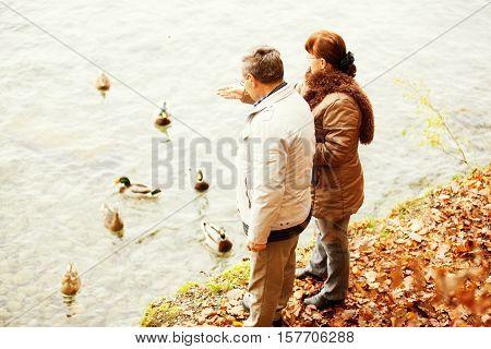 Happy senior couple feeding ducks in Thun's lake Switzerland.