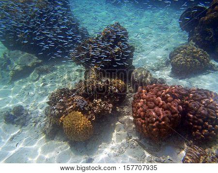 Shoal Of Sardines