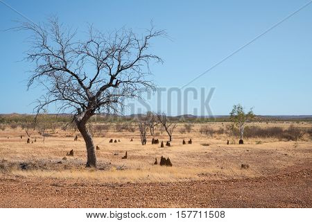 Western Queensland in drought with anthills and dead tree