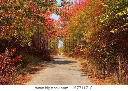 Rural Paved Road Among Autumn Trees