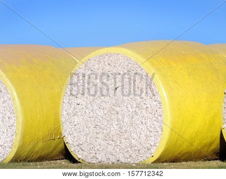 Large yellow bale of raw cotton lays ready for shipment in Eastern Arkansas.
