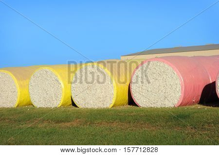 Colorful cotton bales lay in round bales ready for shipment. Raw cotton is freshly harvested.